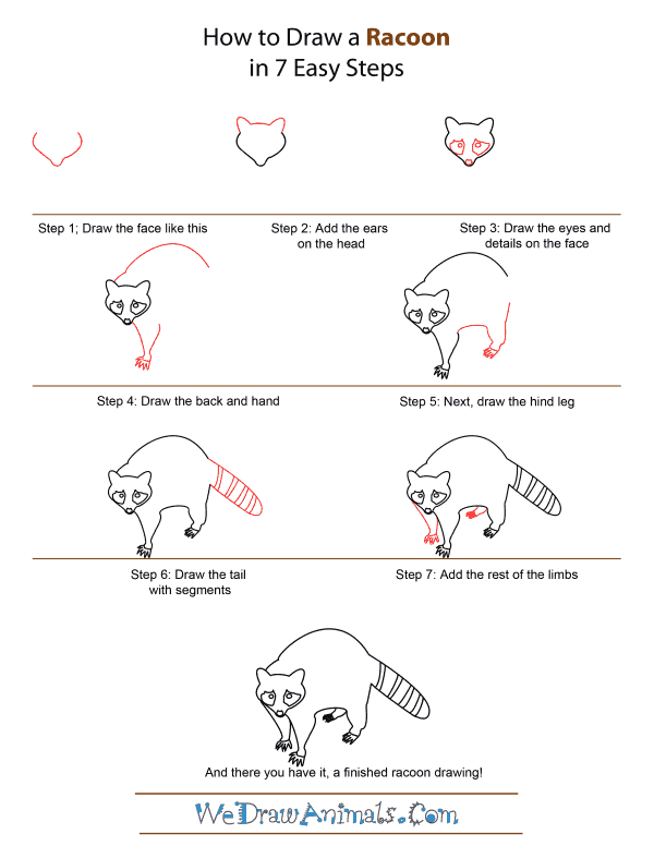 How to Draw A Racoon - Quick Step-by-Step Tutorial