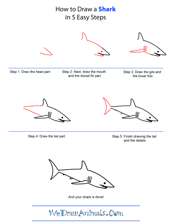 How to draw a shark quick step by step tutorial