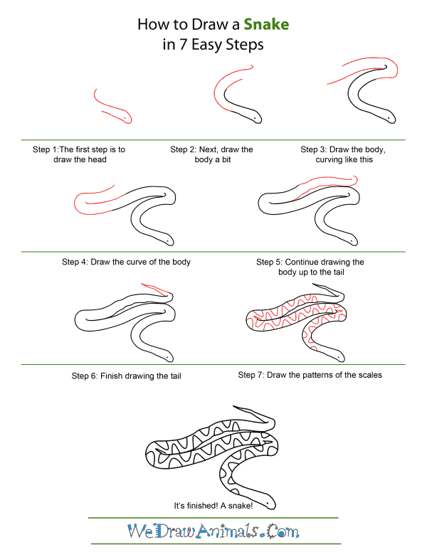 How to Draw A Snake - Quick Step-by-Step Tutorial