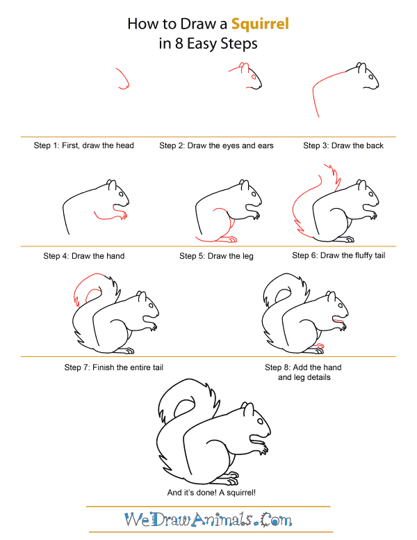 How to Draw A Squirrel - Quick Step-by-Step Tutorial
