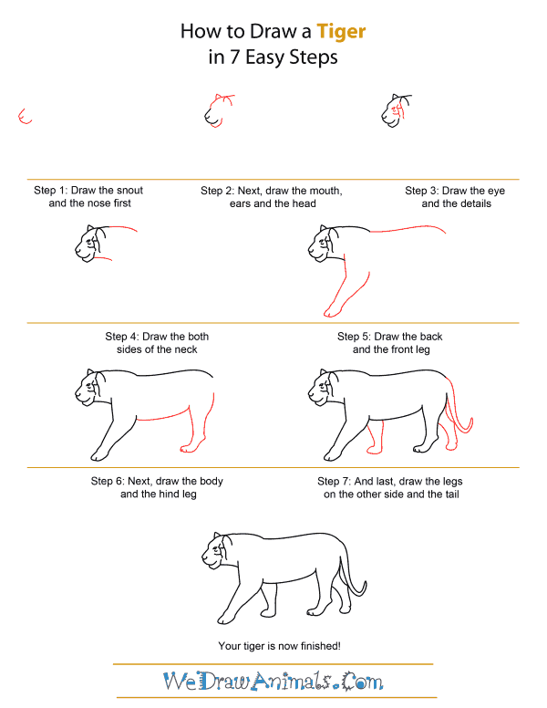How to draw a tiger quick step by step tutorial