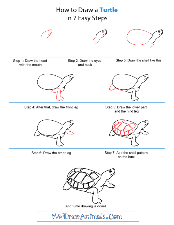 How to Draw A Turtle - Quick Step-by-Step Tutorial