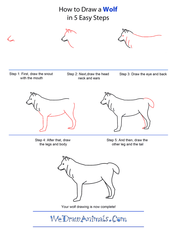 How to Draw A Wolf - Quick Step-by-Step Tutorial