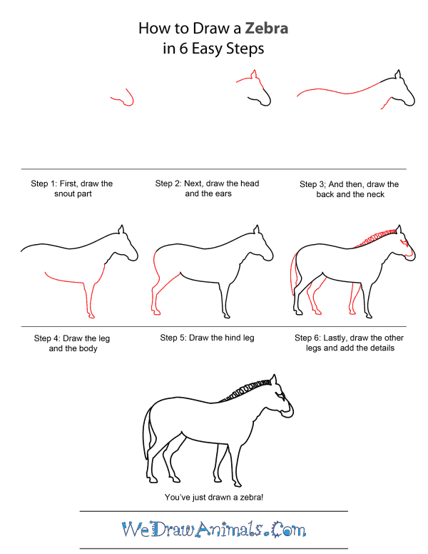 how to draw a zebra quick step by step tutorial