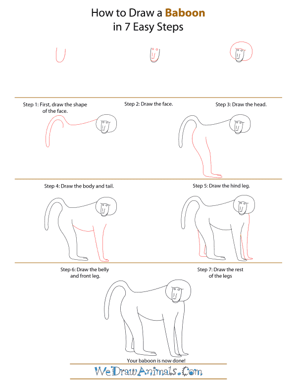 How To Draw A Baboon - Step-by-Step Tutorial