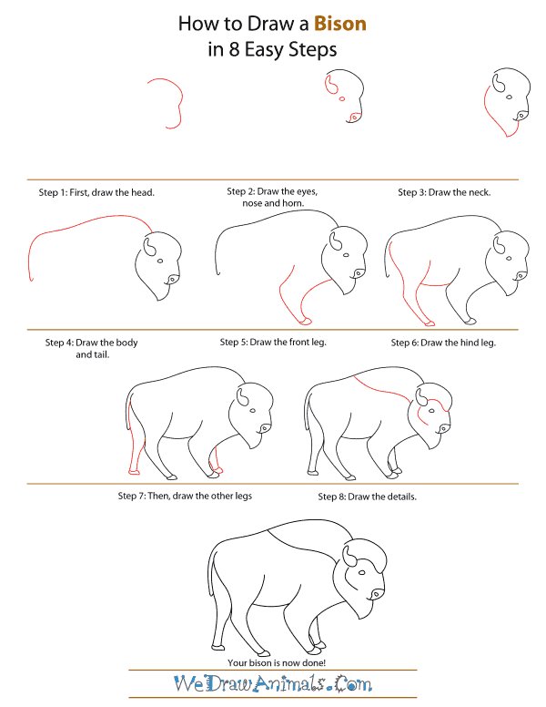 How To Draw A Bison - Step-by-Step Tutorial