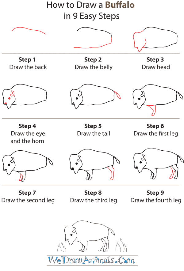 How To Draw A Buffalo - Step-by-Step Tutorial