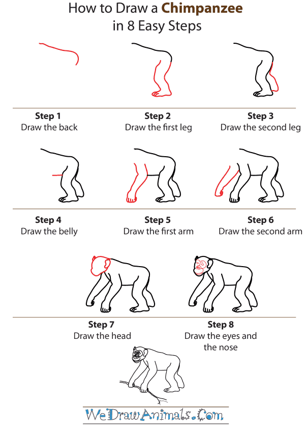 How To Draw A Chimpanzee - Step-by-Step Tutorial