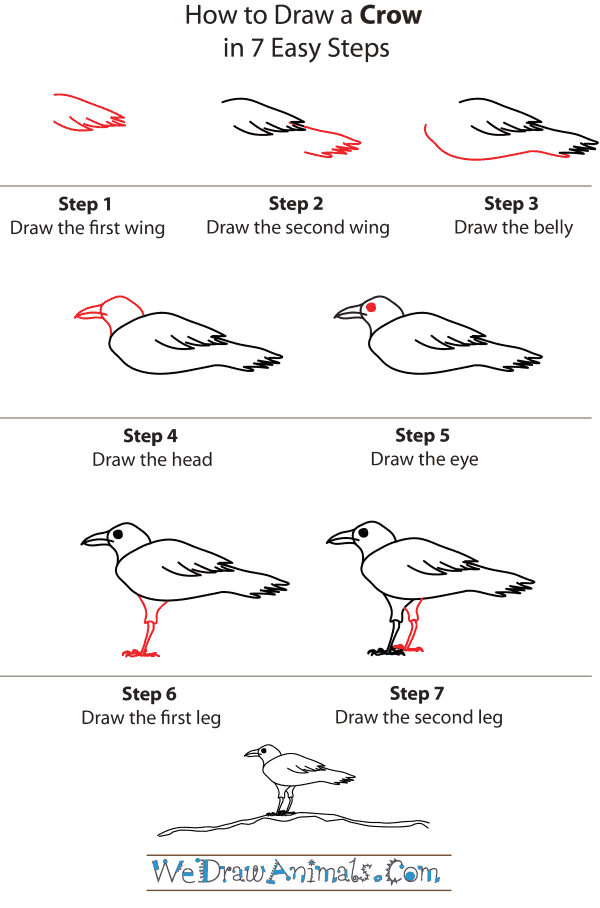 How To Draw A Crow - Step-by-Step Tutorial