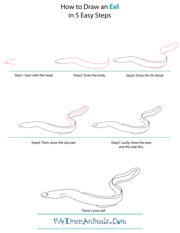 How To Draw An Eel - Step-by-Step Tutorial