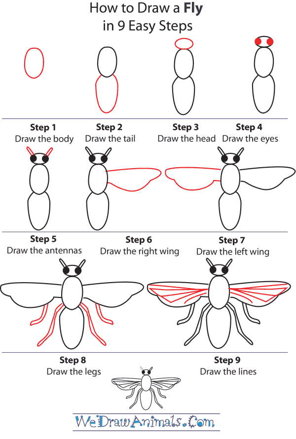 how to draw a fly step by step tutorial