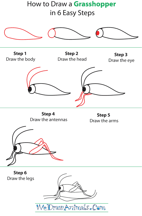 How To Draw A Grasshopper - Step-by-Step Tutorial