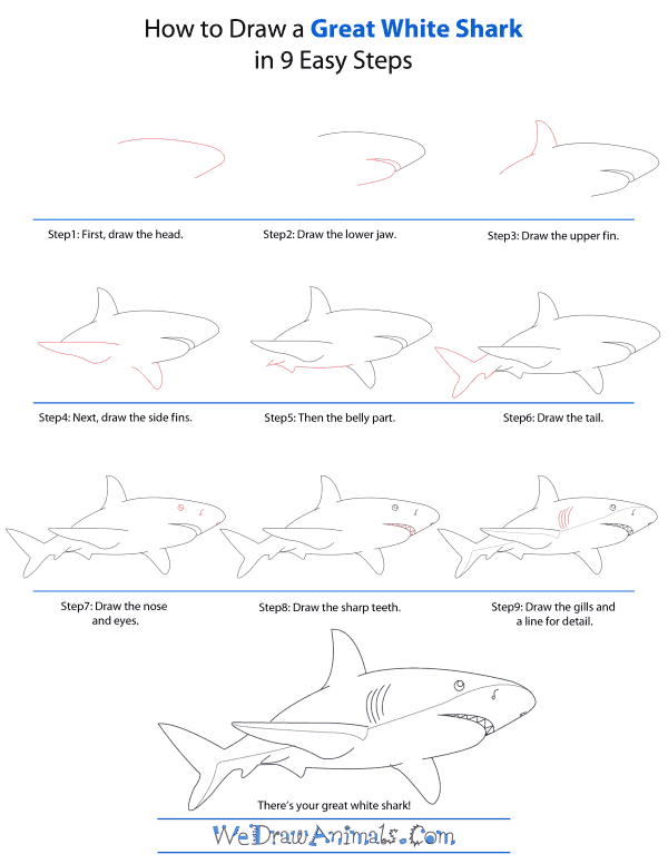 How To Draw A Great-White-Shark - Step-by-Step Tutorial