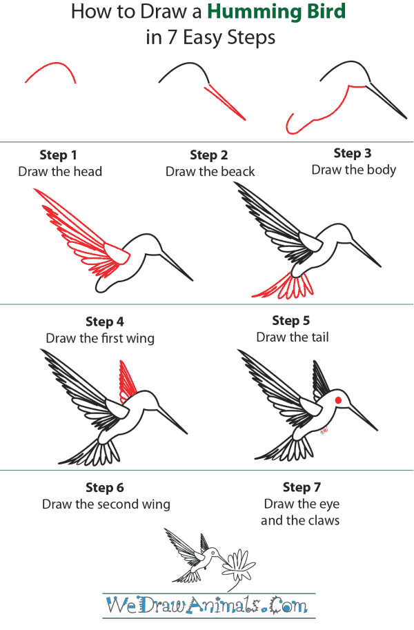 How To Draw A Hummingbird - Step-by-Step Tutorial