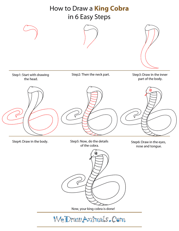 How To Draw A King-Cobra - Step-by-Step Tutorial