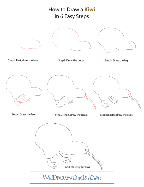 How To Draw A Kiwi - Step-by-Step Tutorial