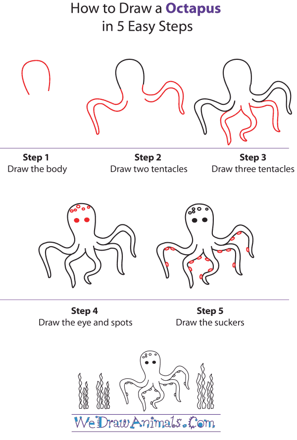 How To Draw An Octopus - Step-by-Step Tutorial