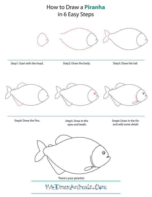 How To Draw A Piranha - Step-by-Step Tutorial