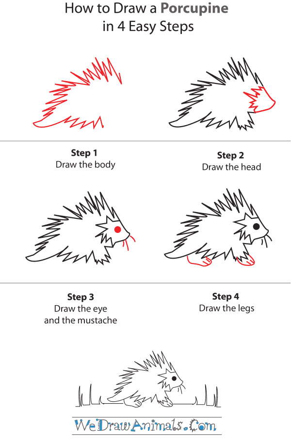 How To Draw A Porcupine - Step-by-Step Tutorial