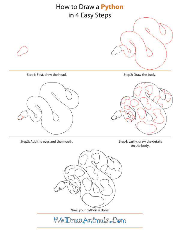 How To Draw A Python - Step-by-Step Tutorial
