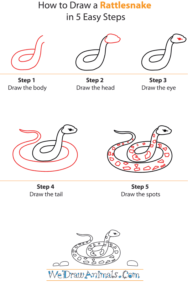 How To Draw A Rattlesnake - Step-by-Step Tutorial