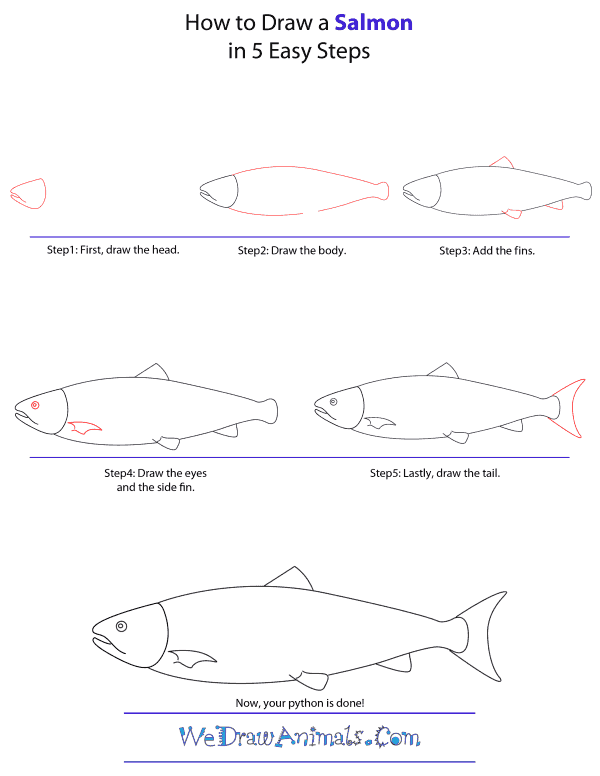 How To Draw A Salmon - Step-by-Step Tutorial