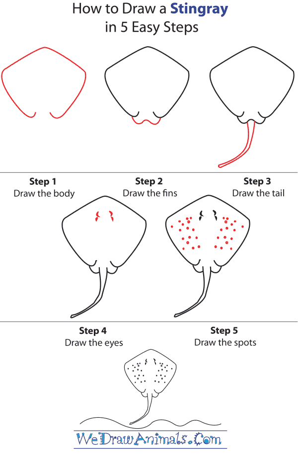 how to draw a stingray Stingray Internal Diagram how to draw a stingray step by step tutorial