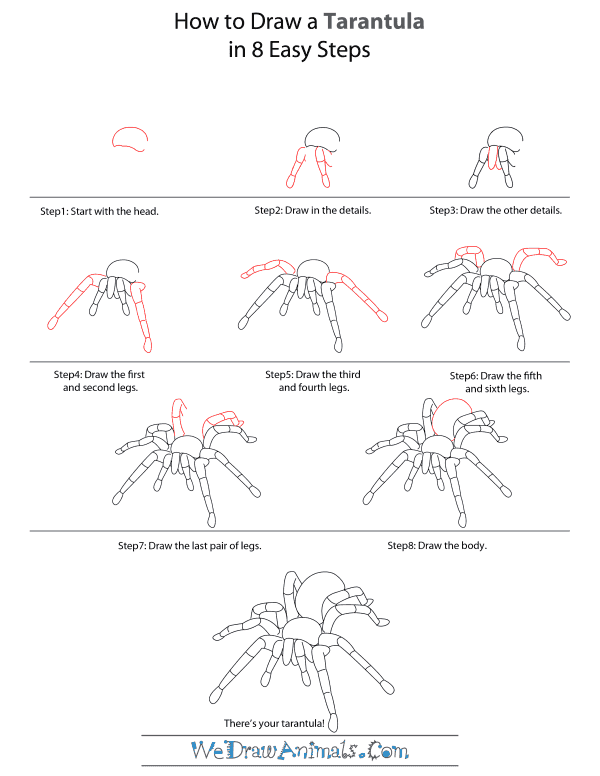 How To Draw A Tarantula - Step-by-Step Tutorial