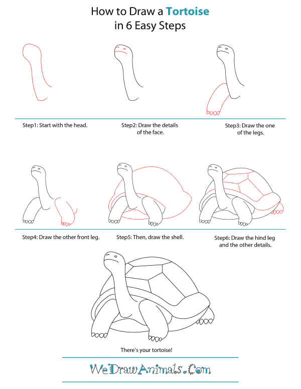 How To Draw A Tortoise - Step-by-Step Tutorial