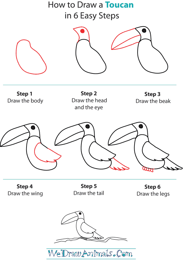 How To Draw A Toucan - Step-by-Step Tutorial
