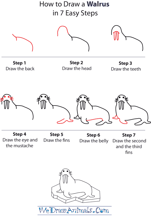 how to draw a walrus step by step tutorial - Simple Drawing For Kid
