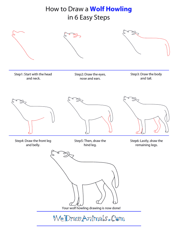 How to draw a wolf howling step by step tutorial