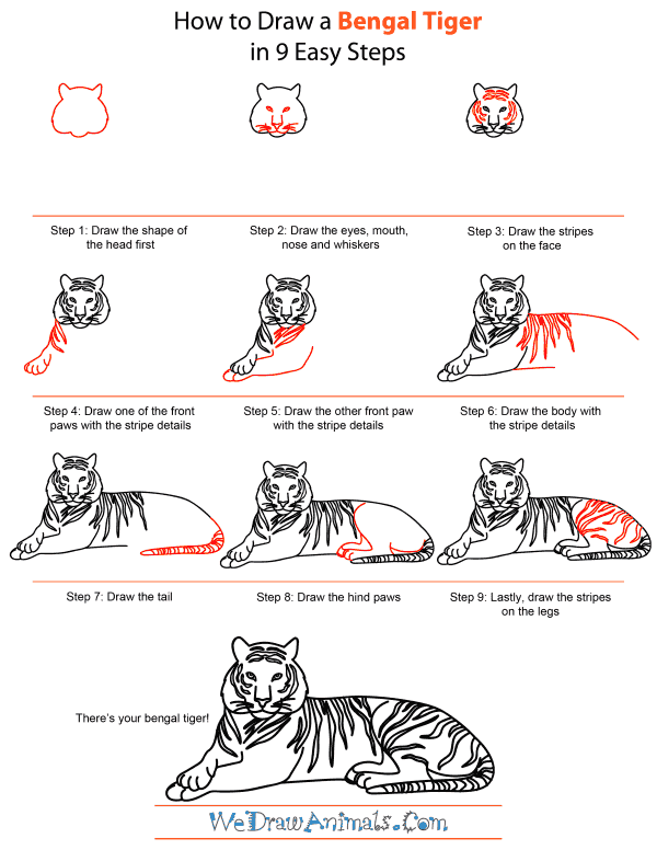 How To Draw A Bengal Tiger - Step-by-Step Tutorial