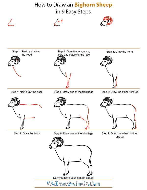 How To Draw A Bighorn Sheep - Step-by-Step Tutorial