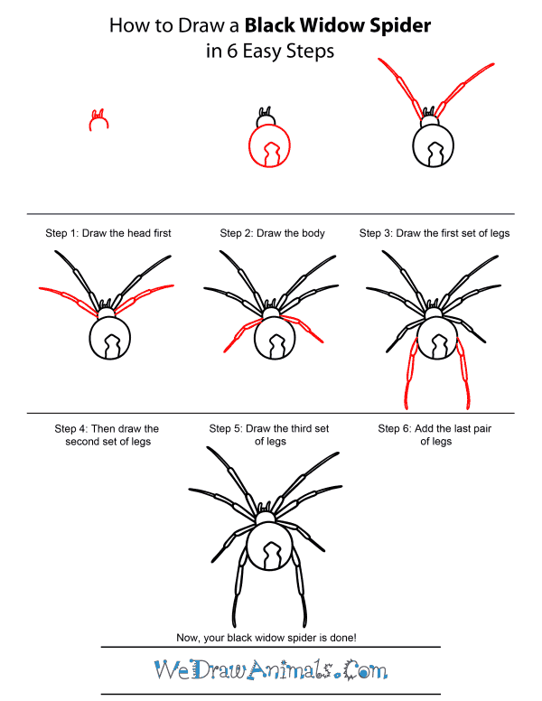 how to take a picture of a spider web