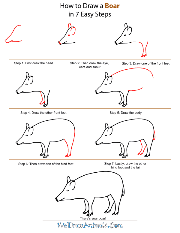 How To Draw A Boar - Step-by-Step Tutorial