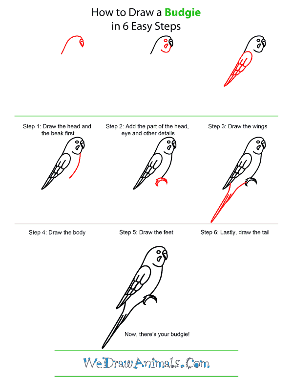 How To Draw A Budgie - Step-by-Step Tutorial
