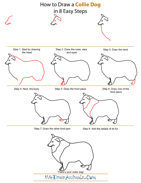 How To Draw A Collie Dog - Step-by-Step Tutorial