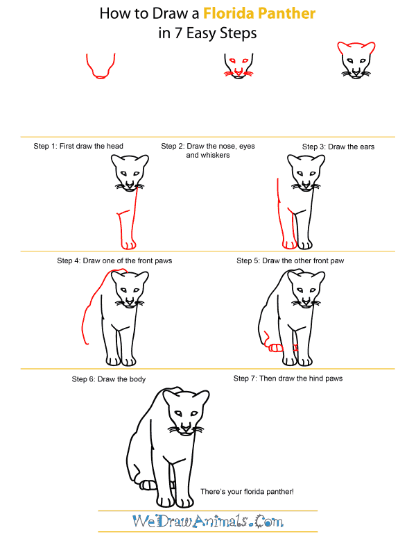 How To Draw A Florida Panther - Step-by-Step Tutorial