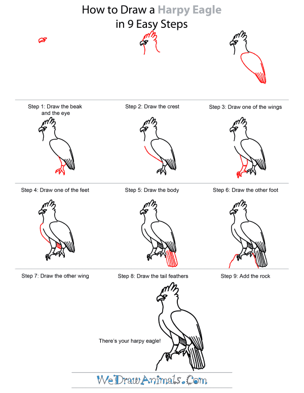 How To Draw A Harpy Eagle - Step-by-Step Tutorial