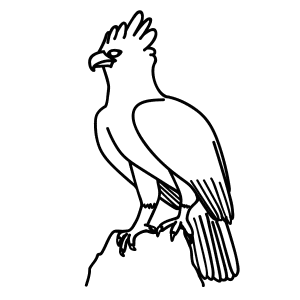 How To Draw Harpy Eagles