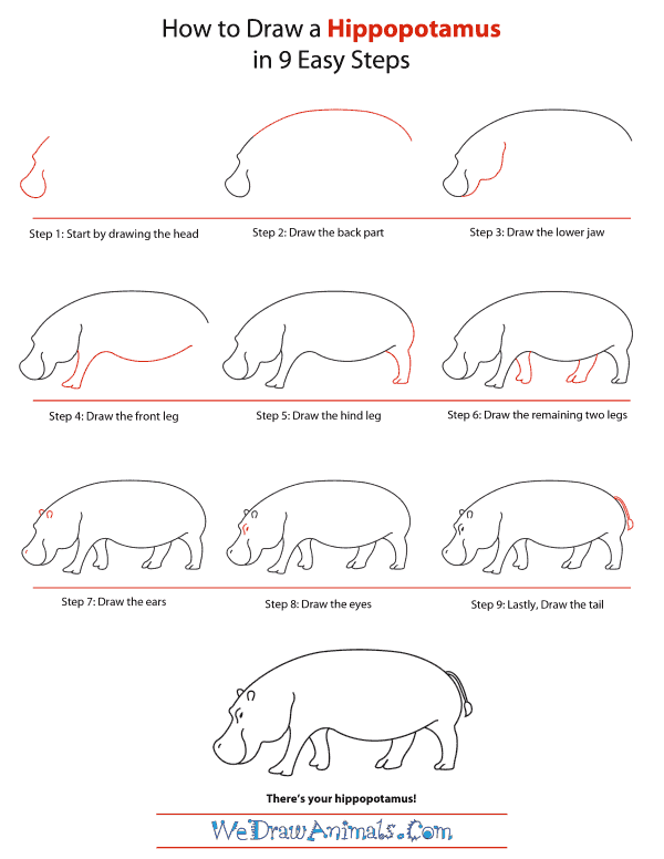 How To Draw A Hippopotamus - Step-by-Step Tutorial