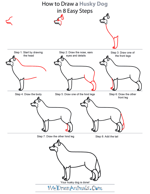 How To Draw A Husky Dog - Step-by-Step Tutorial