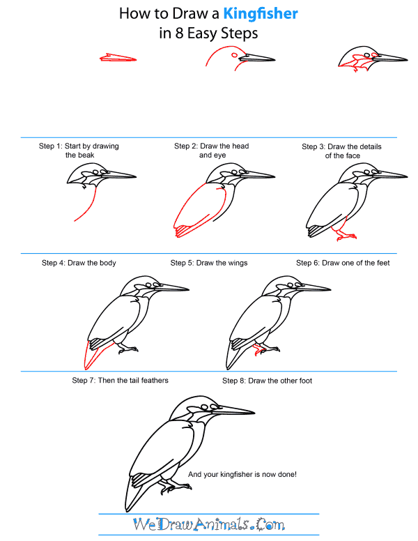 How To Draw A Kingfisher - Step-by-Step Tutorial
