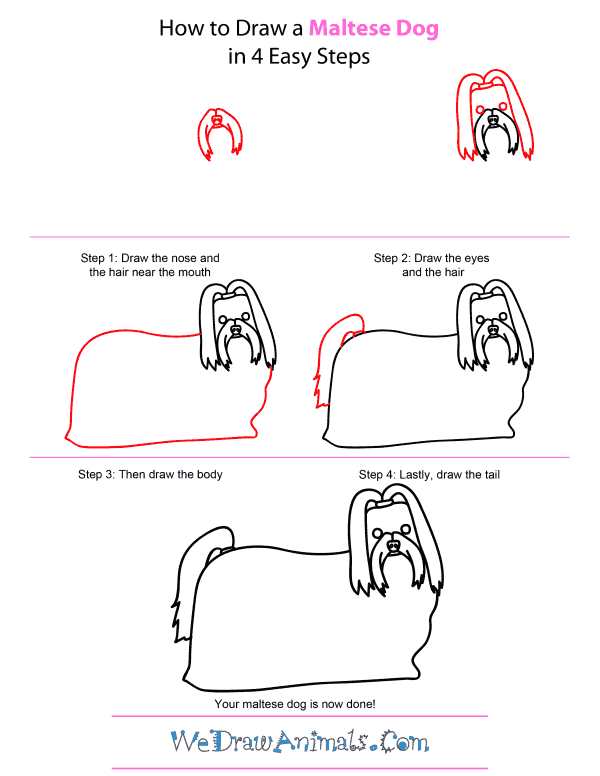 How To Draw A Maltese Dog - Step-by-Step Tutorial