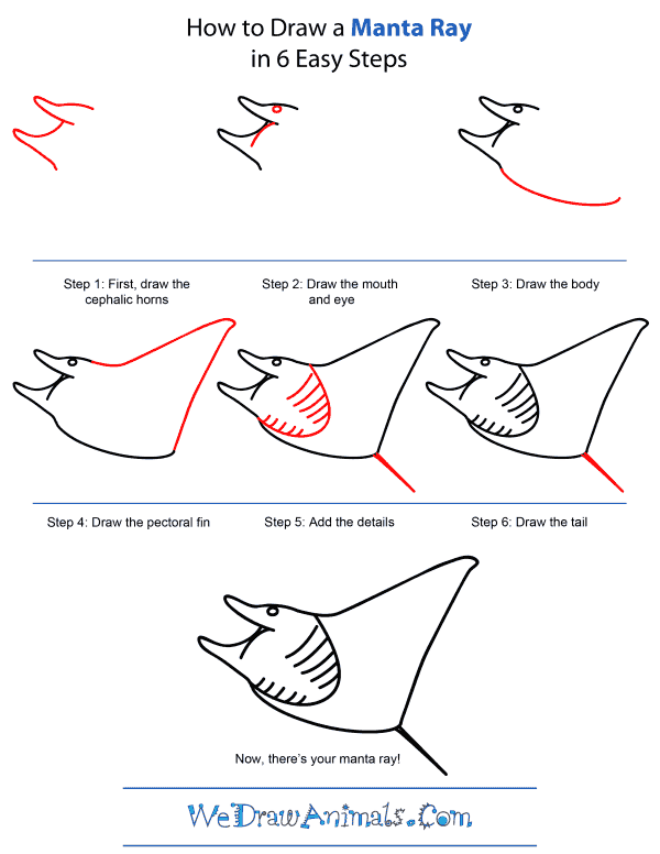 How To Draw A Manta Ray - Step-by-Step Tutorial