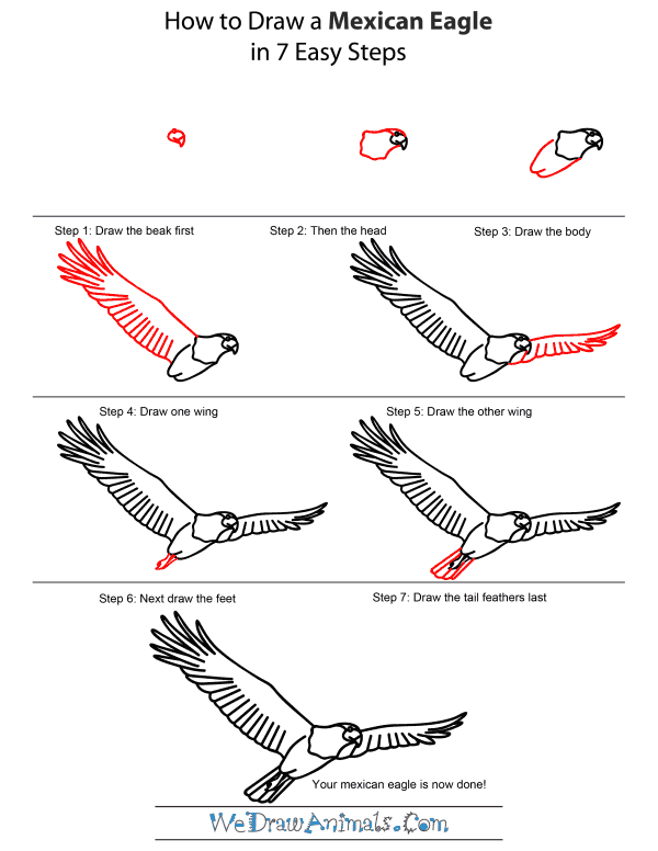 How To Draw A Mexican Eagle - Step-by-Step Tutorial