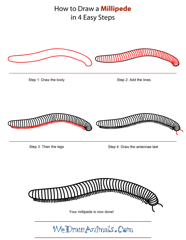 How To Draw A Millipede - Step-by-Step Tutorial