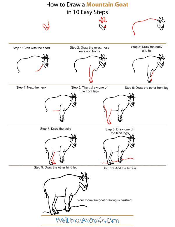How To Draw A Mountain Goat - Step-by-Step Tutorial