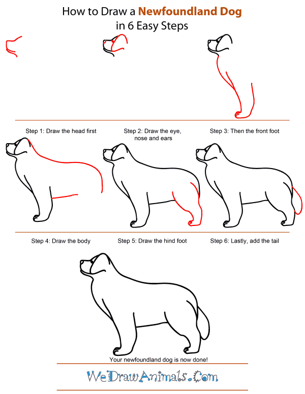 How To Draw A Newfoundland Dog - Step-by-Step Tutorial
